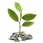 a sprout growing from pebbles isolated on white background
